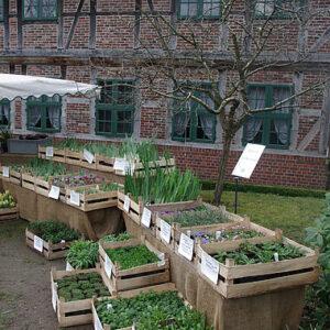 Pflanzenmarkt im Frühling
